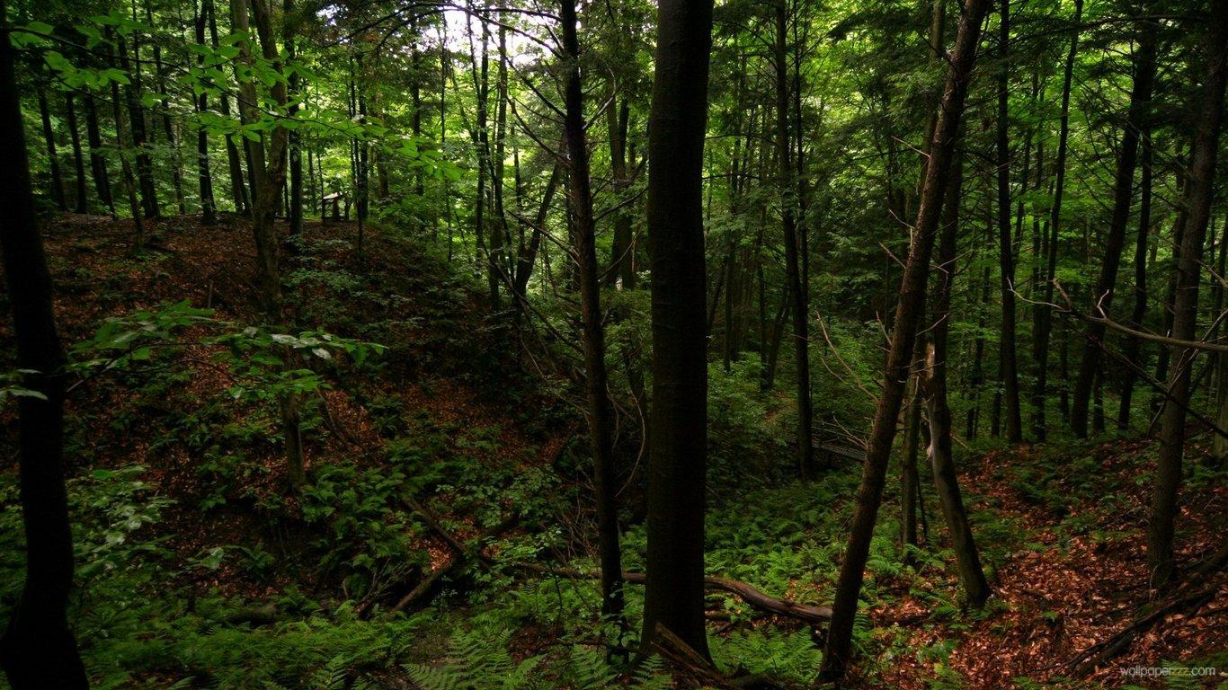 Download Dark Green Forest HD Wallpaper 1366x768