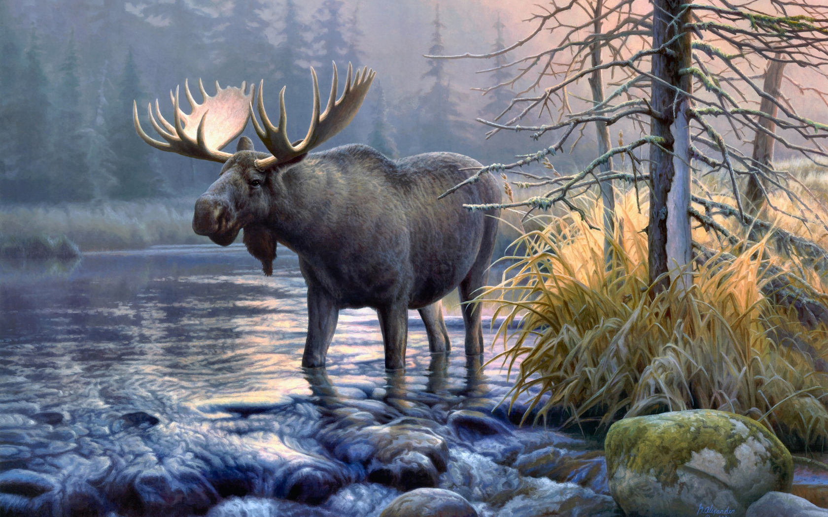 Awesome Moose wallpaper Moose wallpapers 1680x1050