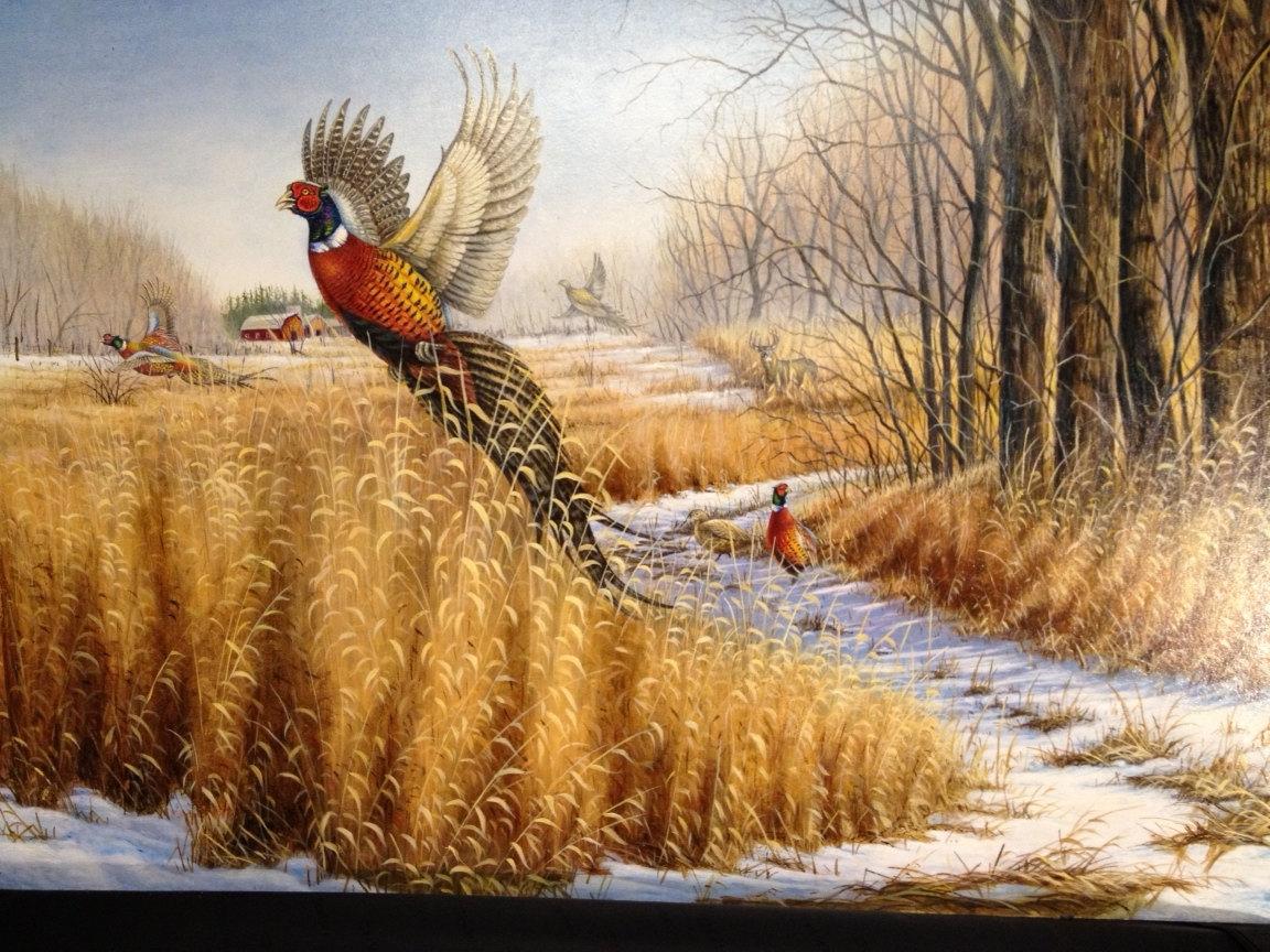 Pheasant Hunting Wallpaper - WallpaperSafari