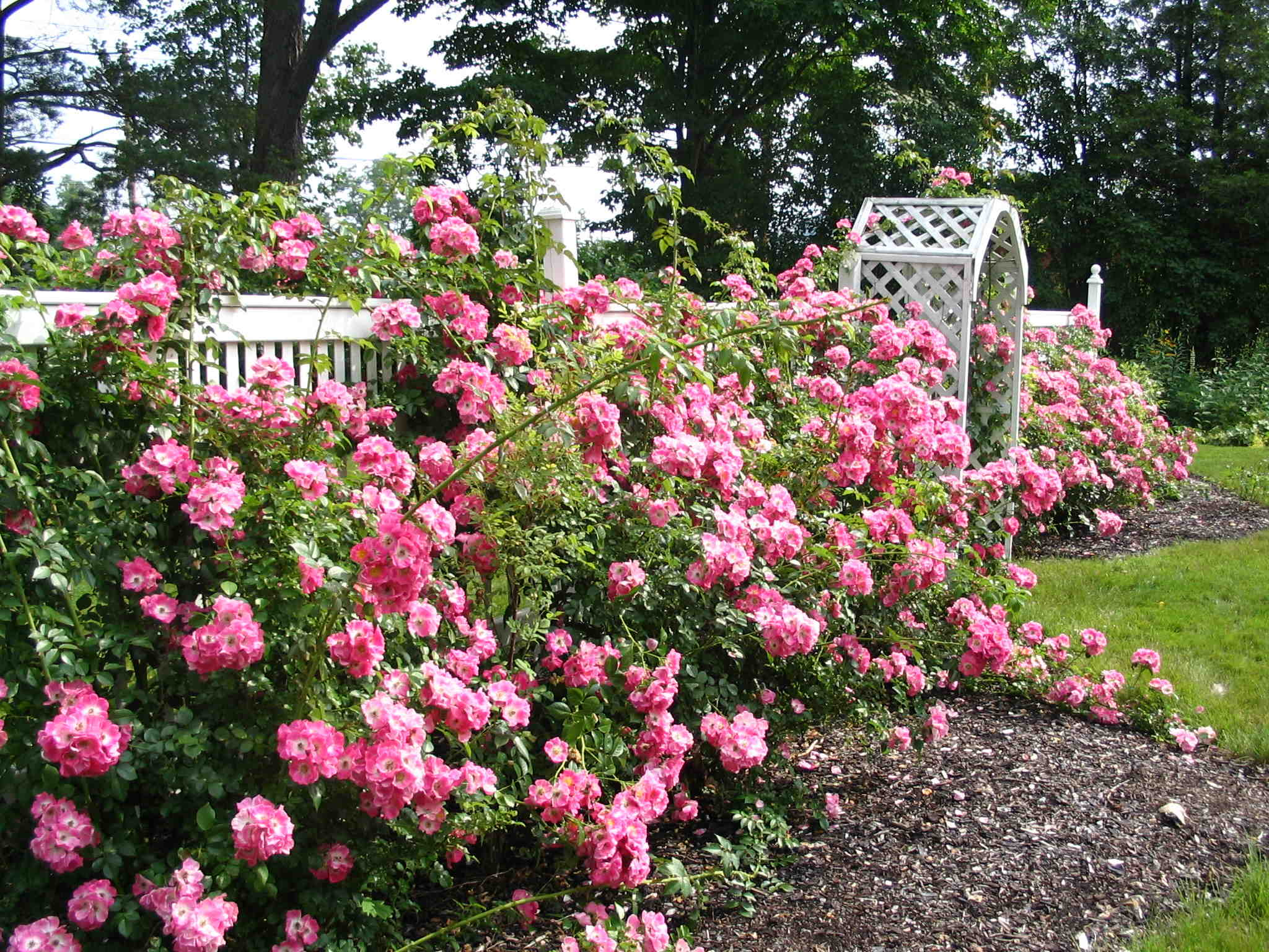 English rose gardens english rose garden seend - Rose Garden Wallpaper Wallpapersafari Garden Idea English