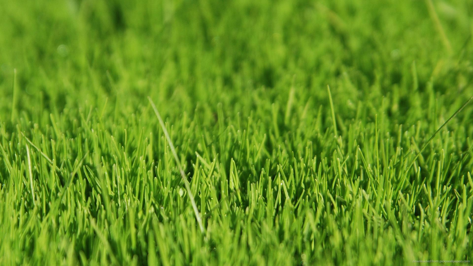 Grassland Background wallpaper - 598780