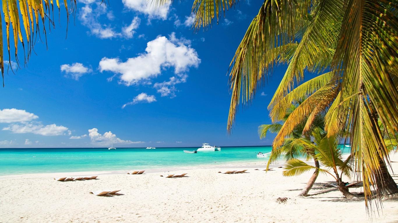 Palm Tree On Beach Wallpaper 1366x768 ImageBankbiz 1366x768
