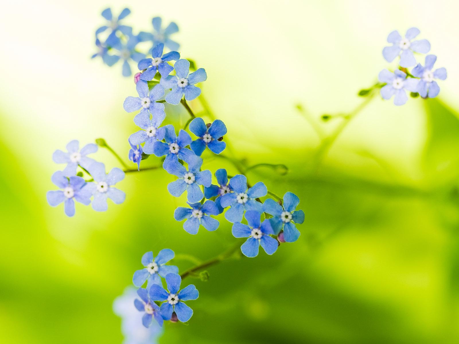 26 Beautiful Flower Wallpapers 1600x1200