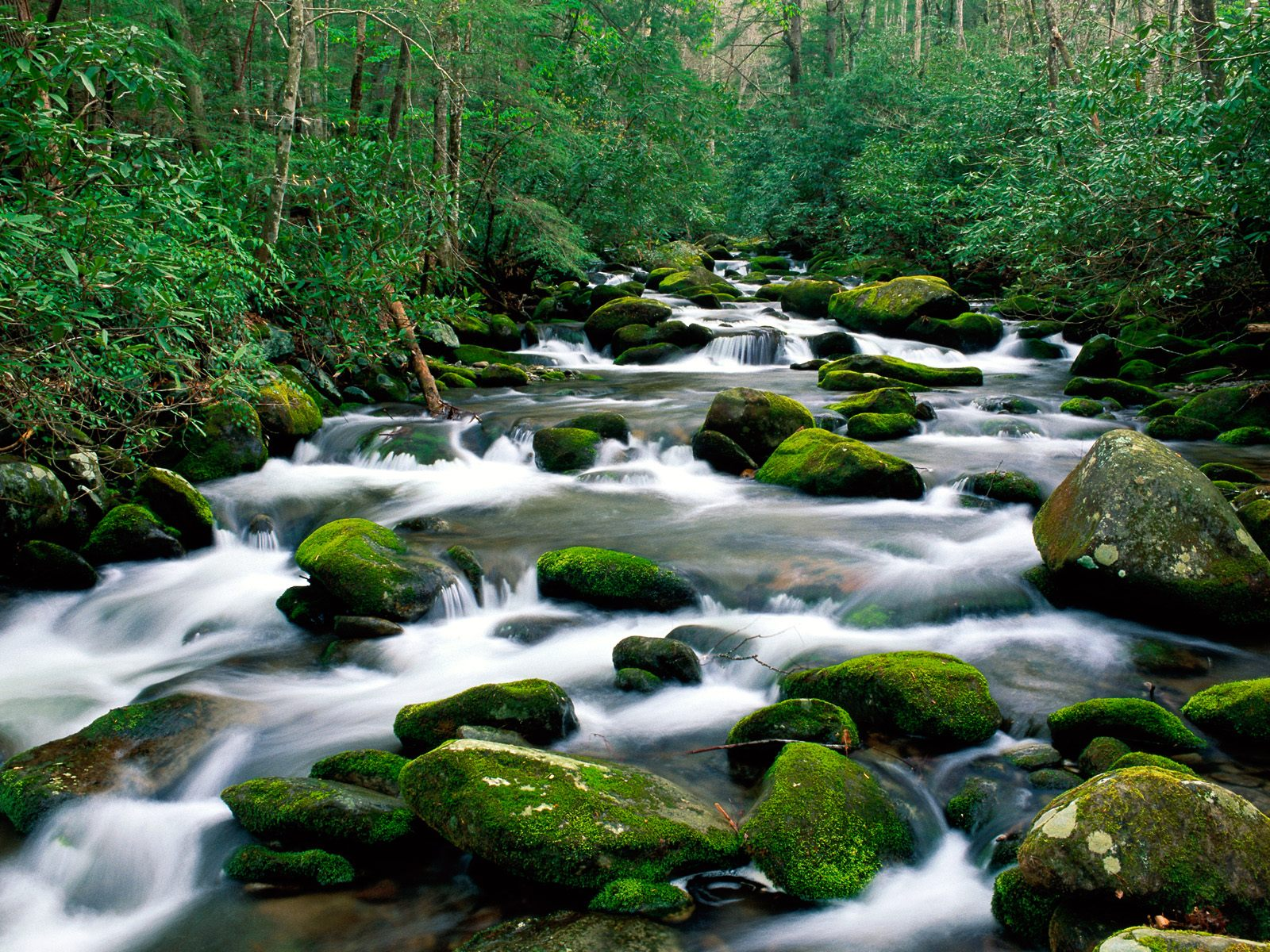 River Great Smoky Mountains Tennessee Wallpaper   HQ Wallpapers 1600x1200