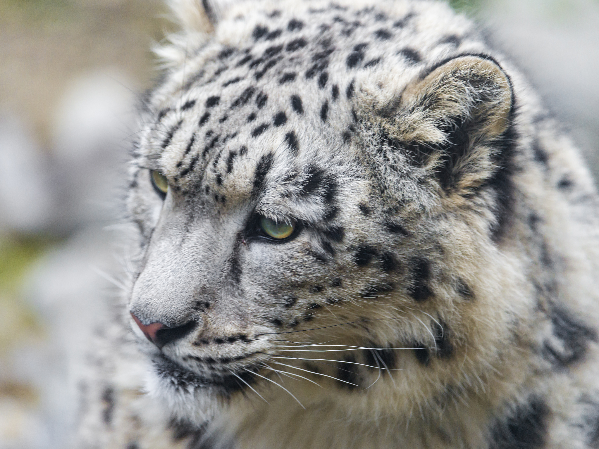 [45+] Snow Leopard Desktop Wallpaper on WallpaperSafari