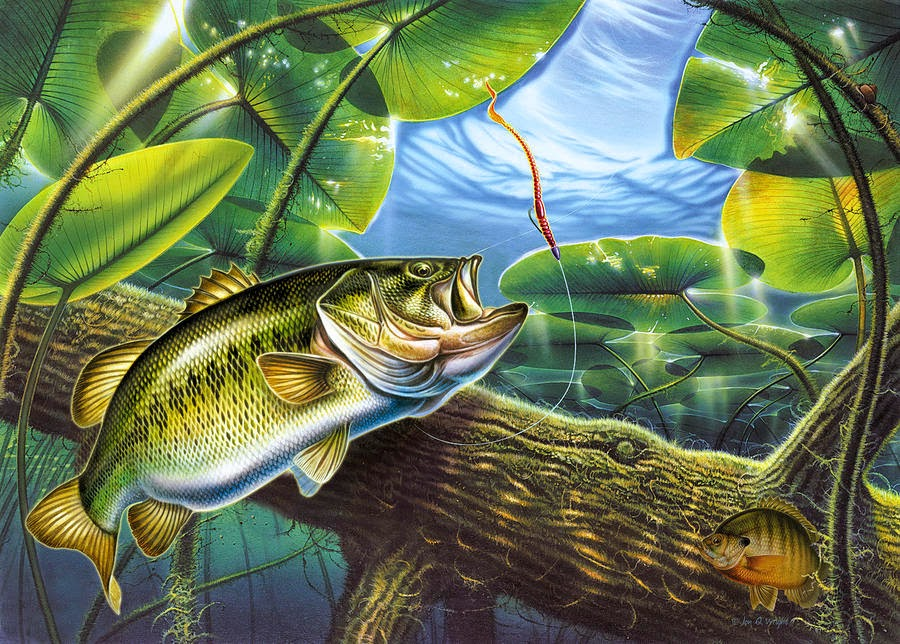 largemouth bass 900x644