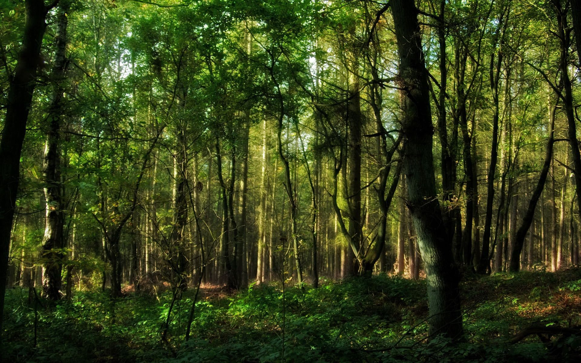 Green Forests Jungle Background Daily Pics Update HD Wallpapers 1920x1200