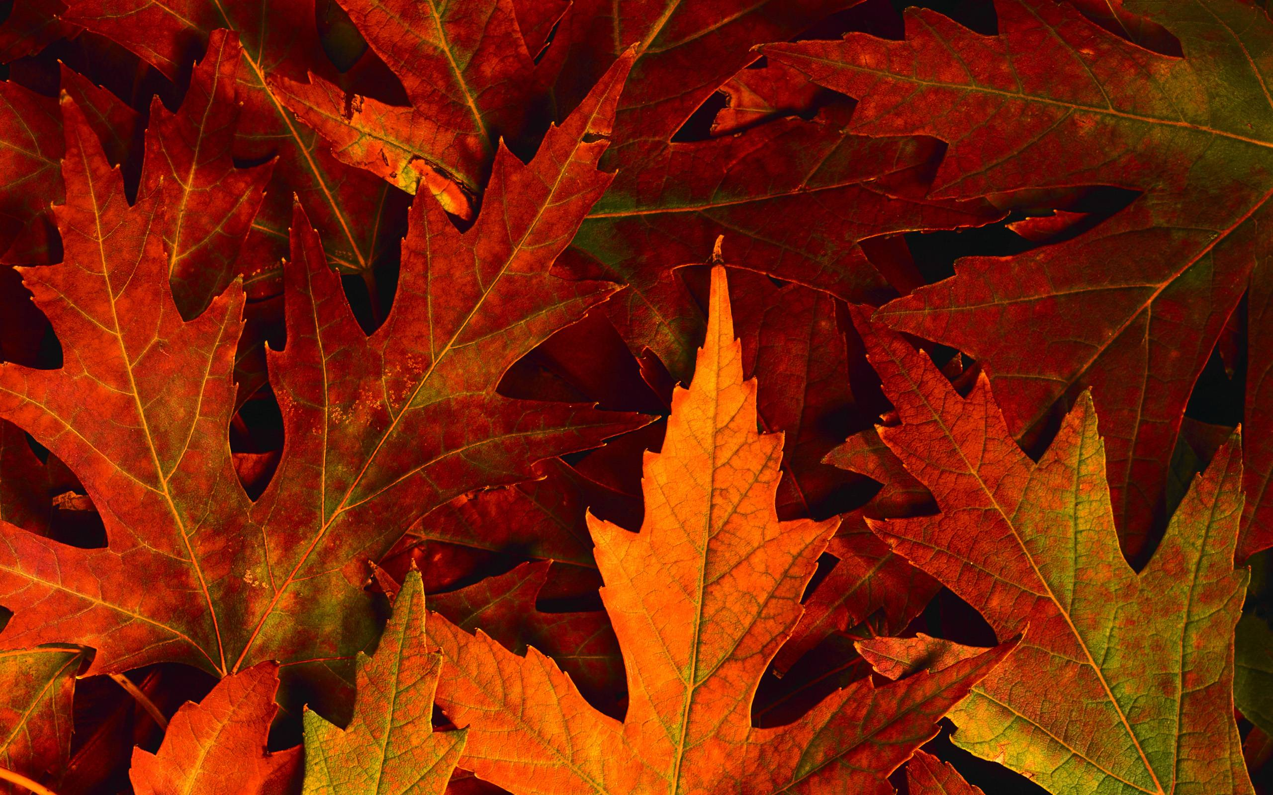 fall leaves desktop wallpaper - wallpapersafari