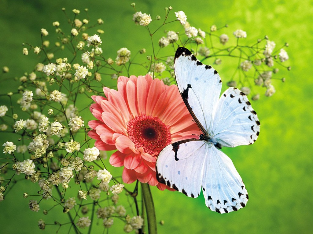 Butterfly Background Wallpapers Butterfly Background Wallpapers 1024x768