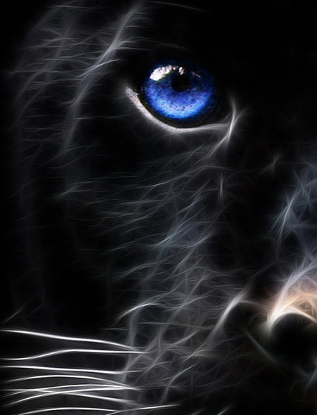 Panthers Eye Wallpaper for Amazon Kindle Fire HD 89 450x590