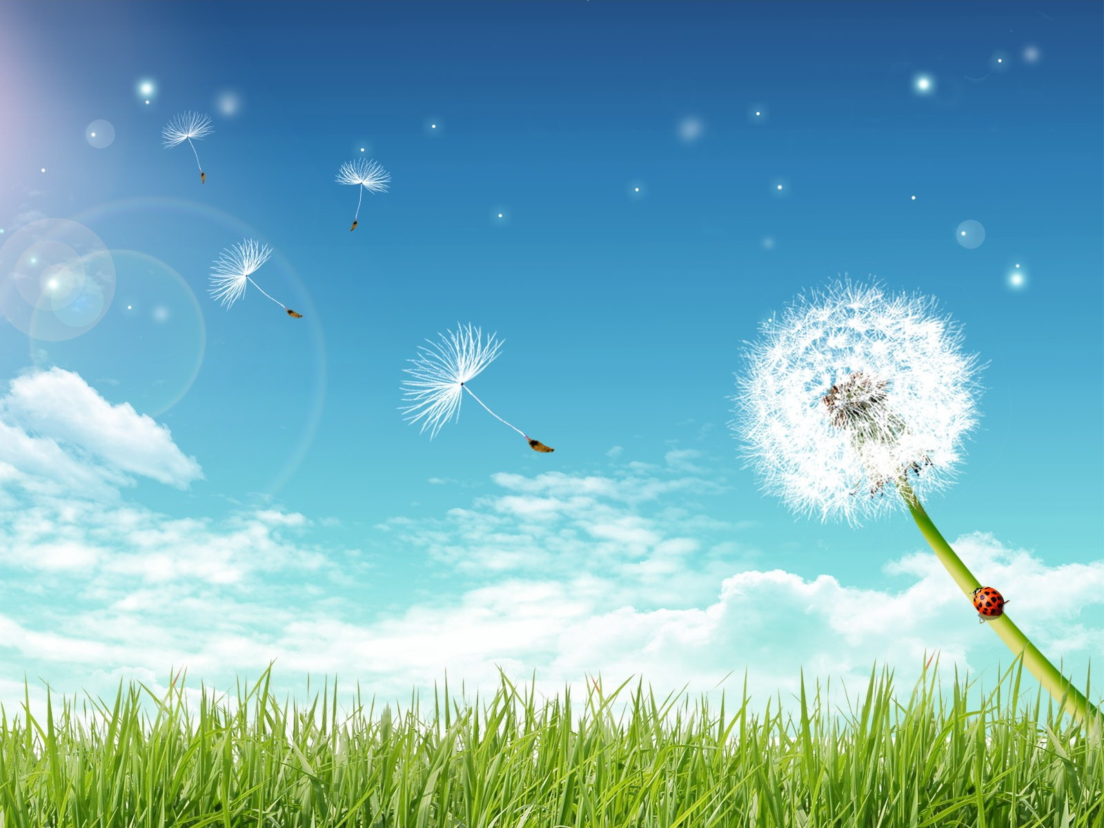 16806 desktop wallpapers dandelion 1600x1200