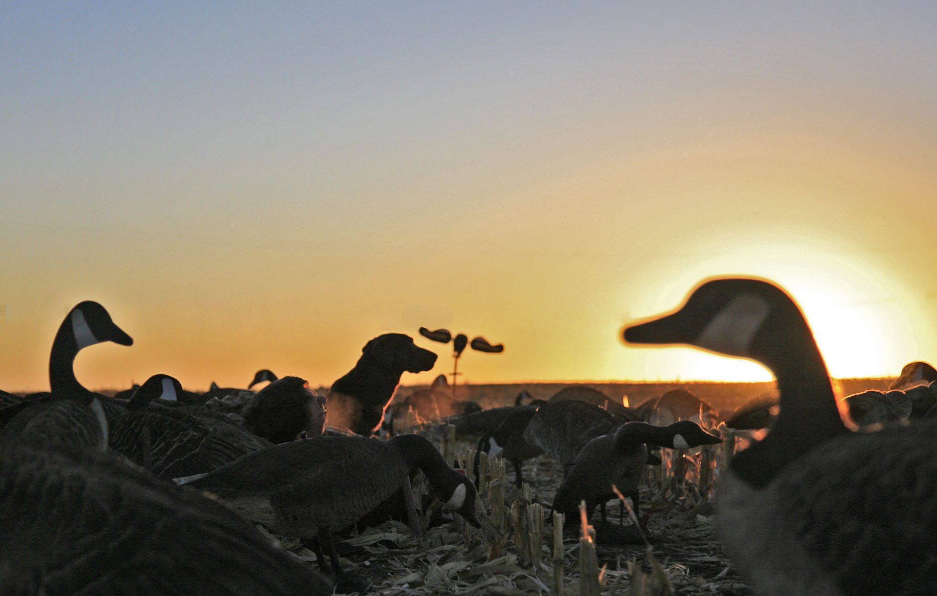 WATERFOWL HuntingDuck and Goose hunting Photos 1880x1196