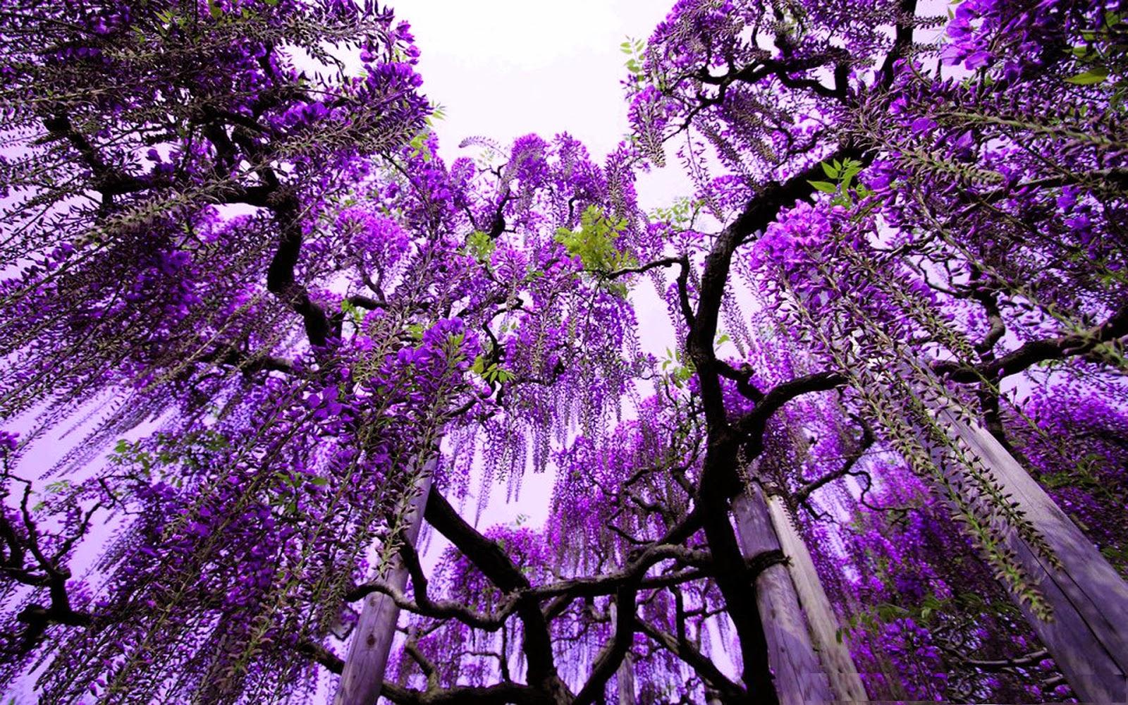purple nature hd wallpapers wallpapersafari
