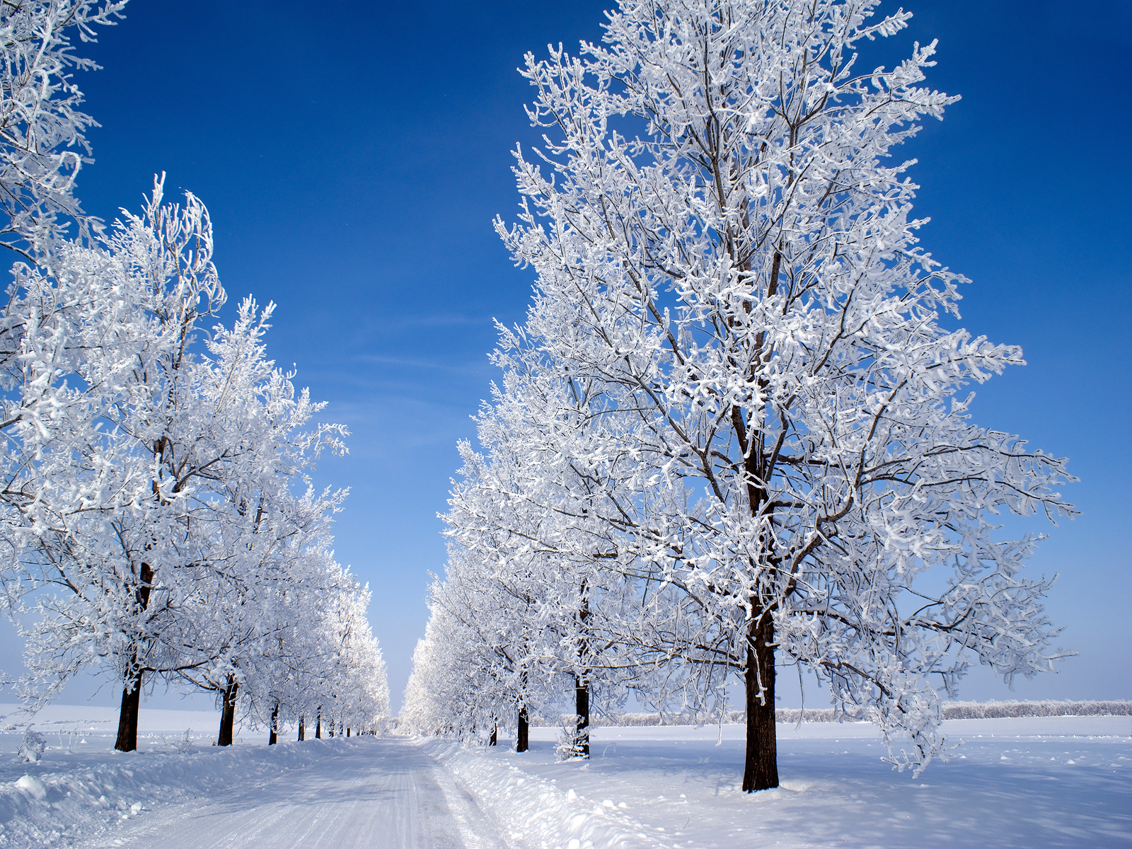 winter snow wallpaper 1600x1200