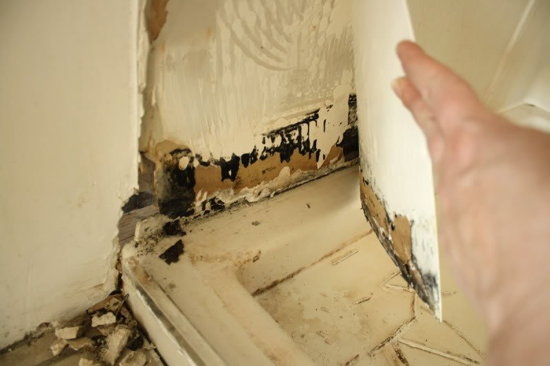 black mold behind drywall 300x199 Black Mold Guide Everything You 800x533