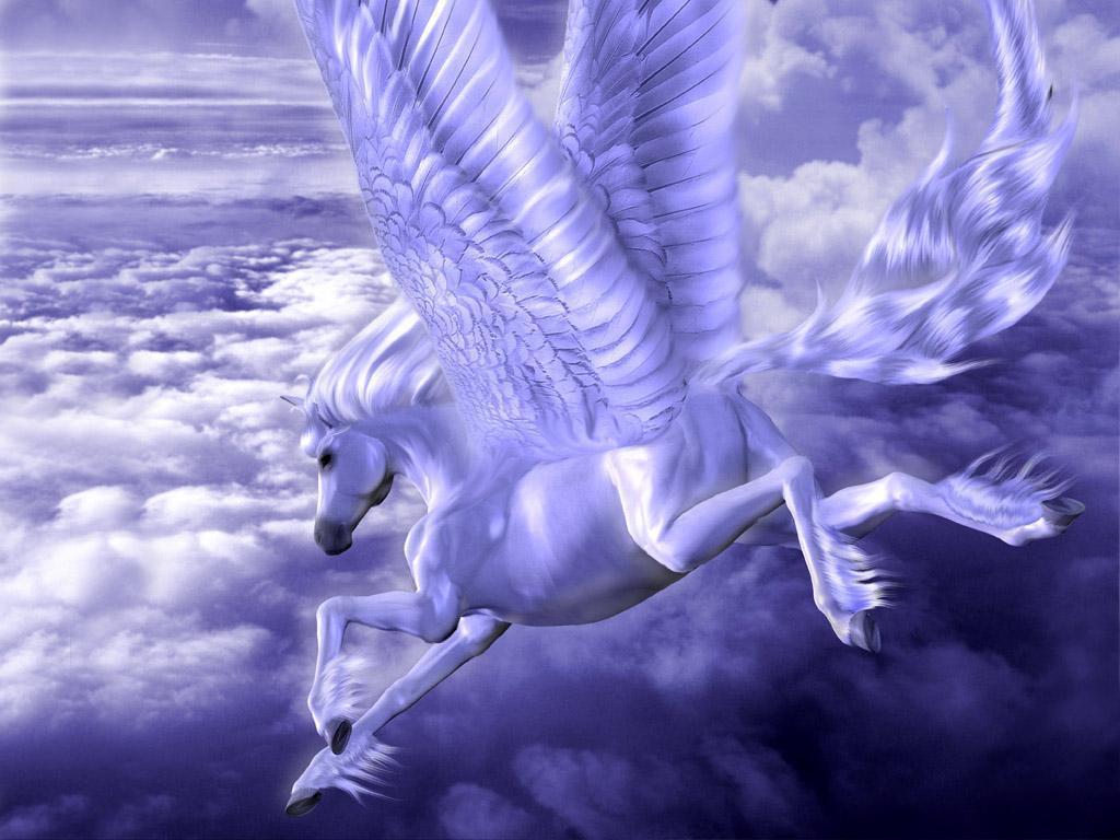 Pegasus Unicorn   Fantasy Animals Wallpaper 13992258 1024x768