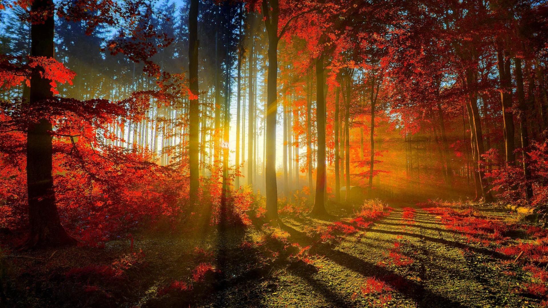 Beautiful Nature Hd Wallpapers Free Download #15862 Wallpaper ...