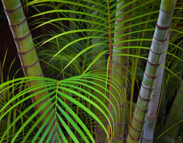 Tropical Ferns Wall Art tropical wallpaper 640x500
