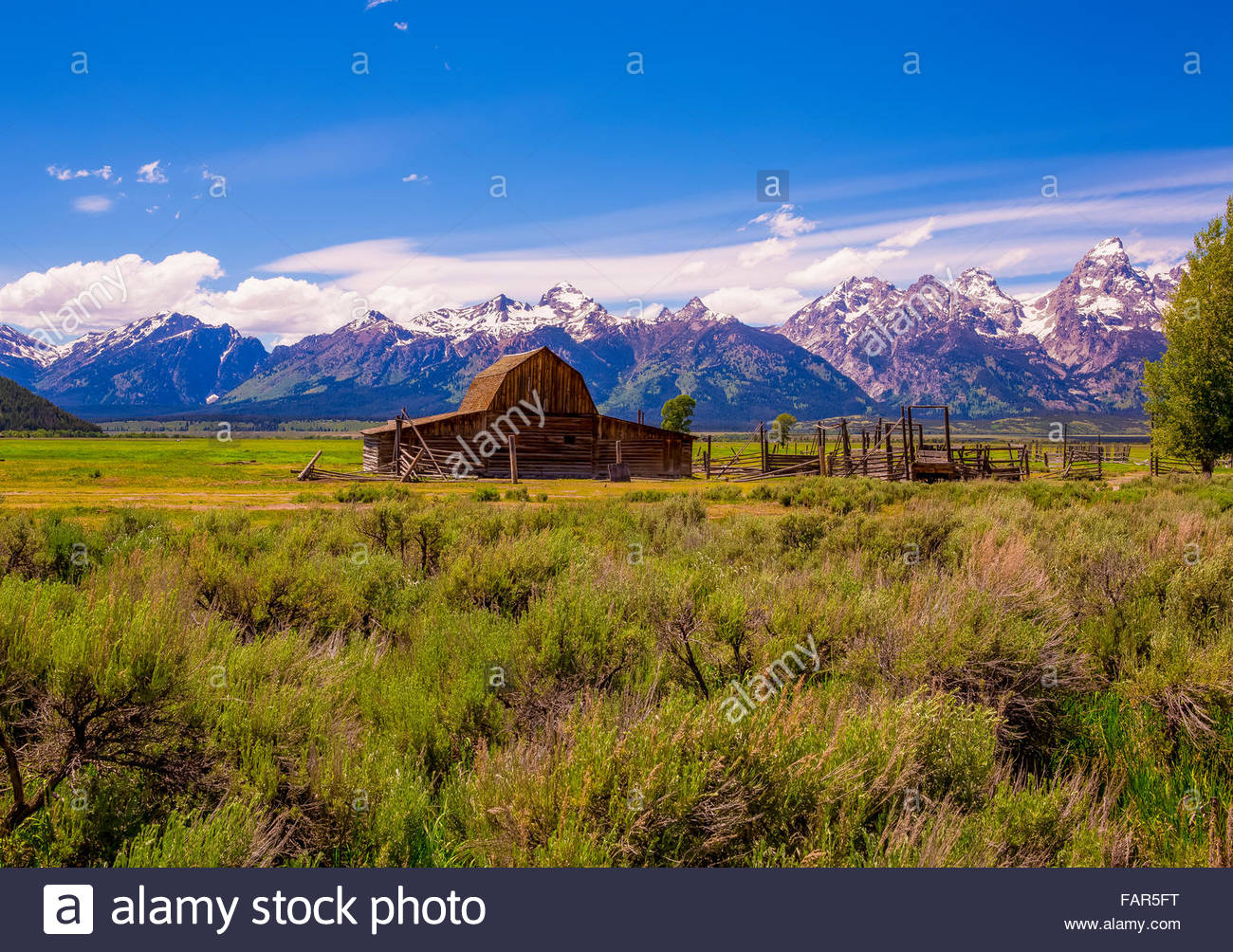 moultons barn with the Grand Tetons in the background Stock Photo 1300x1004