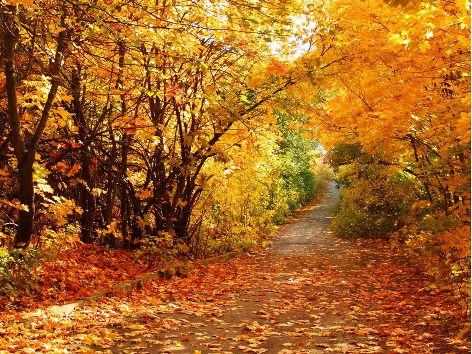 Free Download Image Beautiful Autumn Scenery