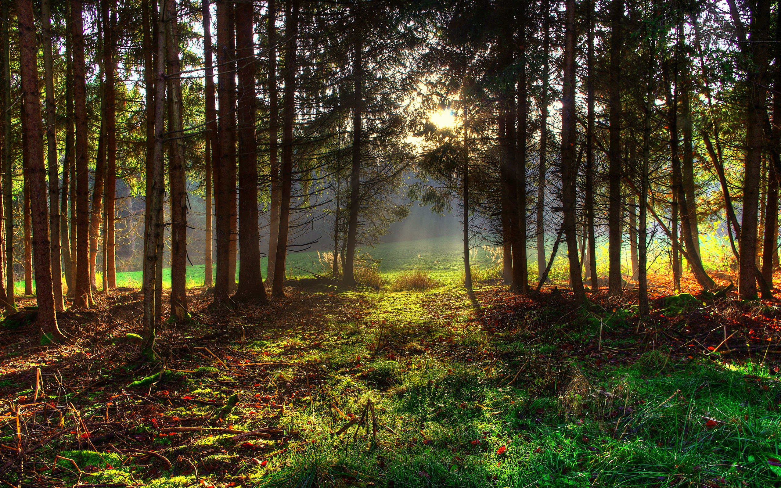 Spring forest wallpaper wallpapersafari for Forest floor definition
