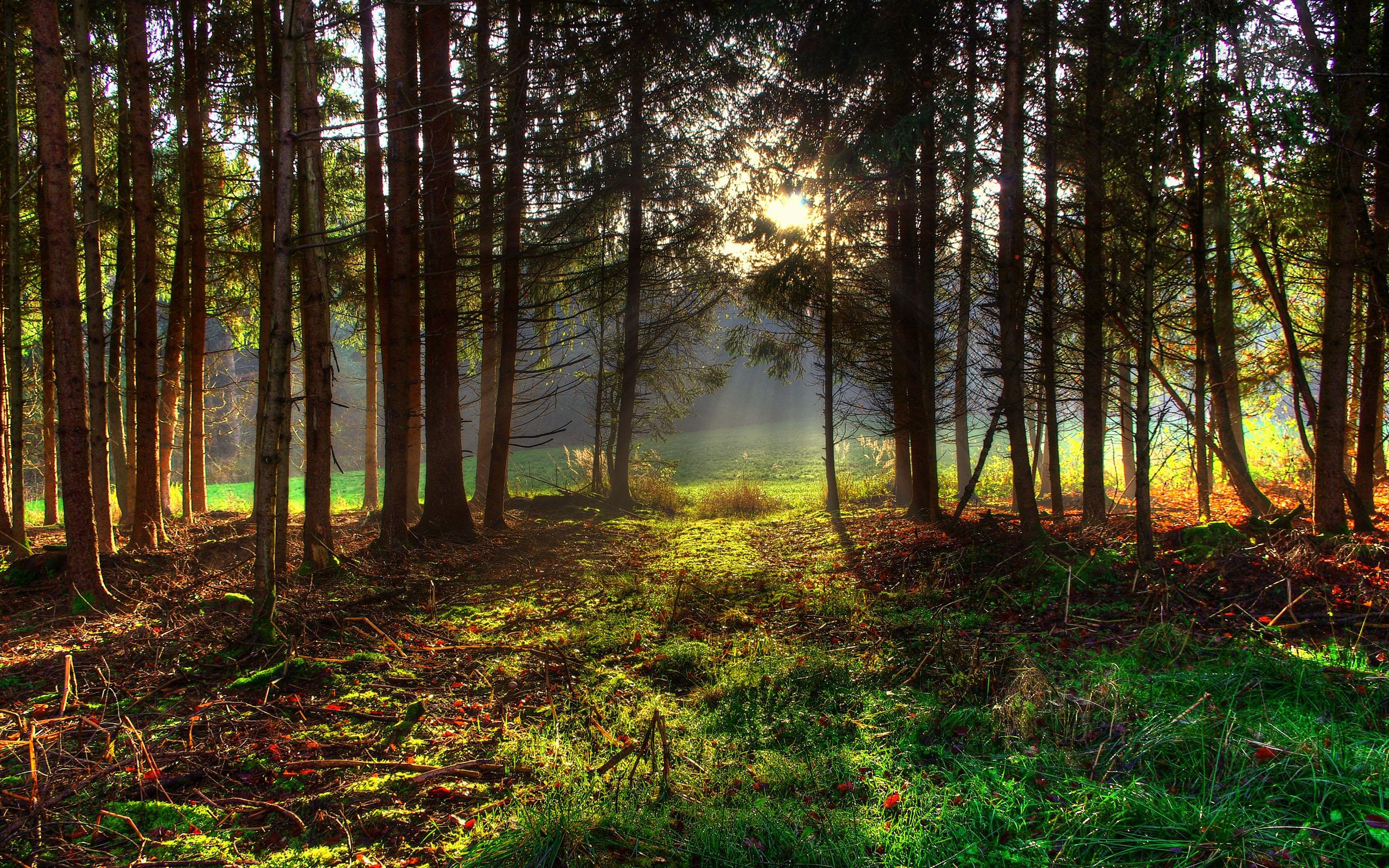 821816-gorgeous-spring-forest-wallpaper.jpg HTML code