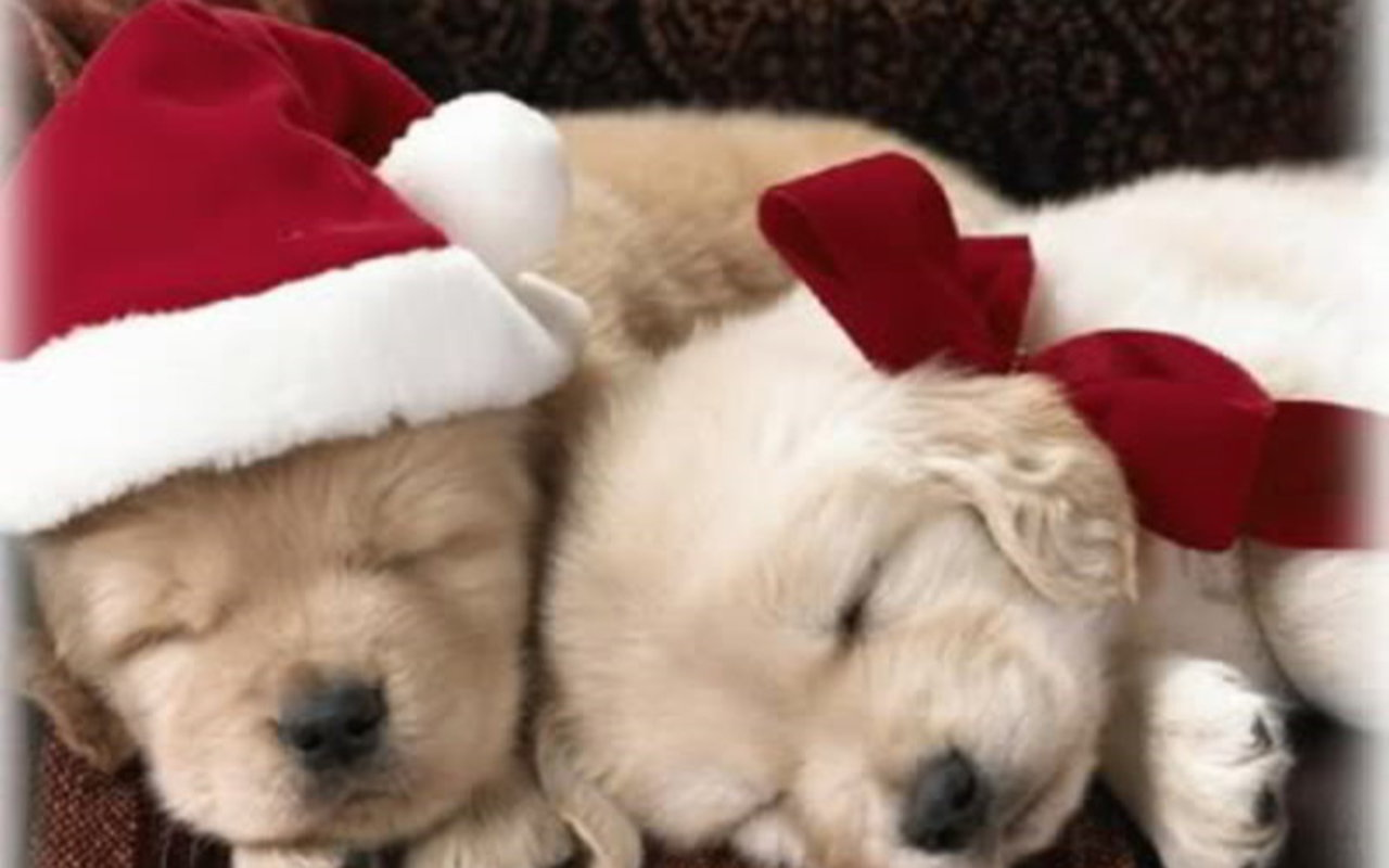 Puppies images Christmas Puppy wallpaper photos 15897189 1280x800