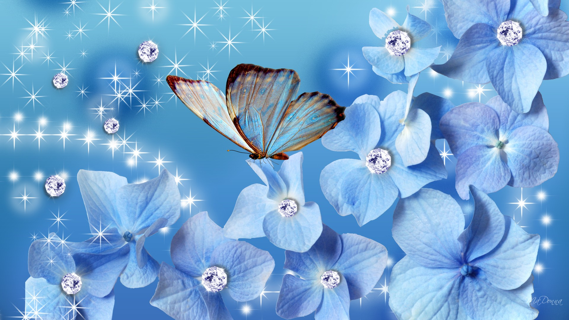 Blue Butterfly Wallpaper HD 1920x1080