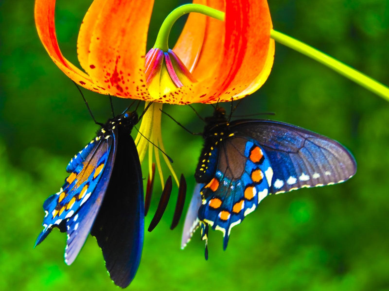 Beautiful Butterflies   Butterflies Wallpaper 9481730 1600x1200