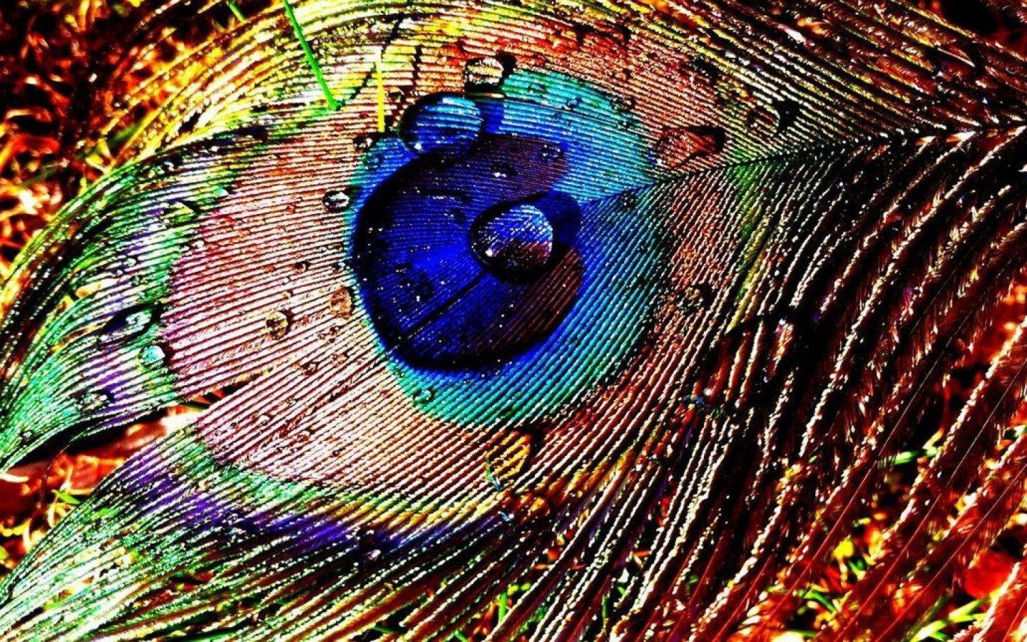 Peacock Feather Design Wallpaper On 1440x900