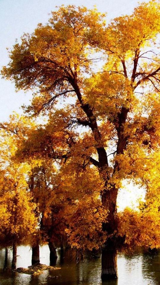 Fall Wallpaper for Phone - WallpaperSafari
