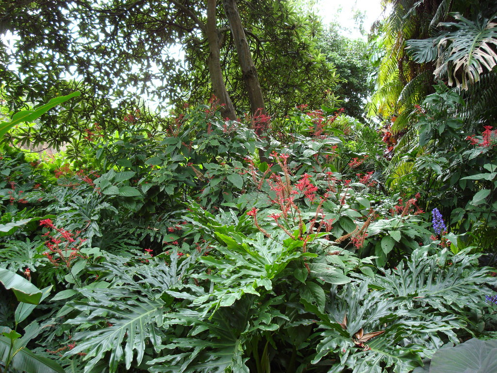 Tropical Garden Wallpapers   Pictures of tropical plants 1024x768