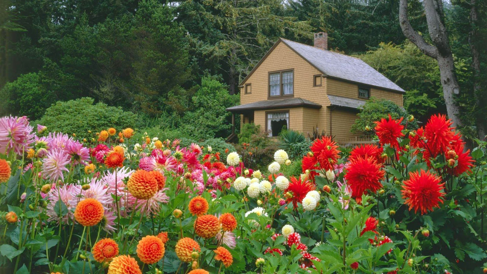 flower garden desktop wallpaper 1600x900