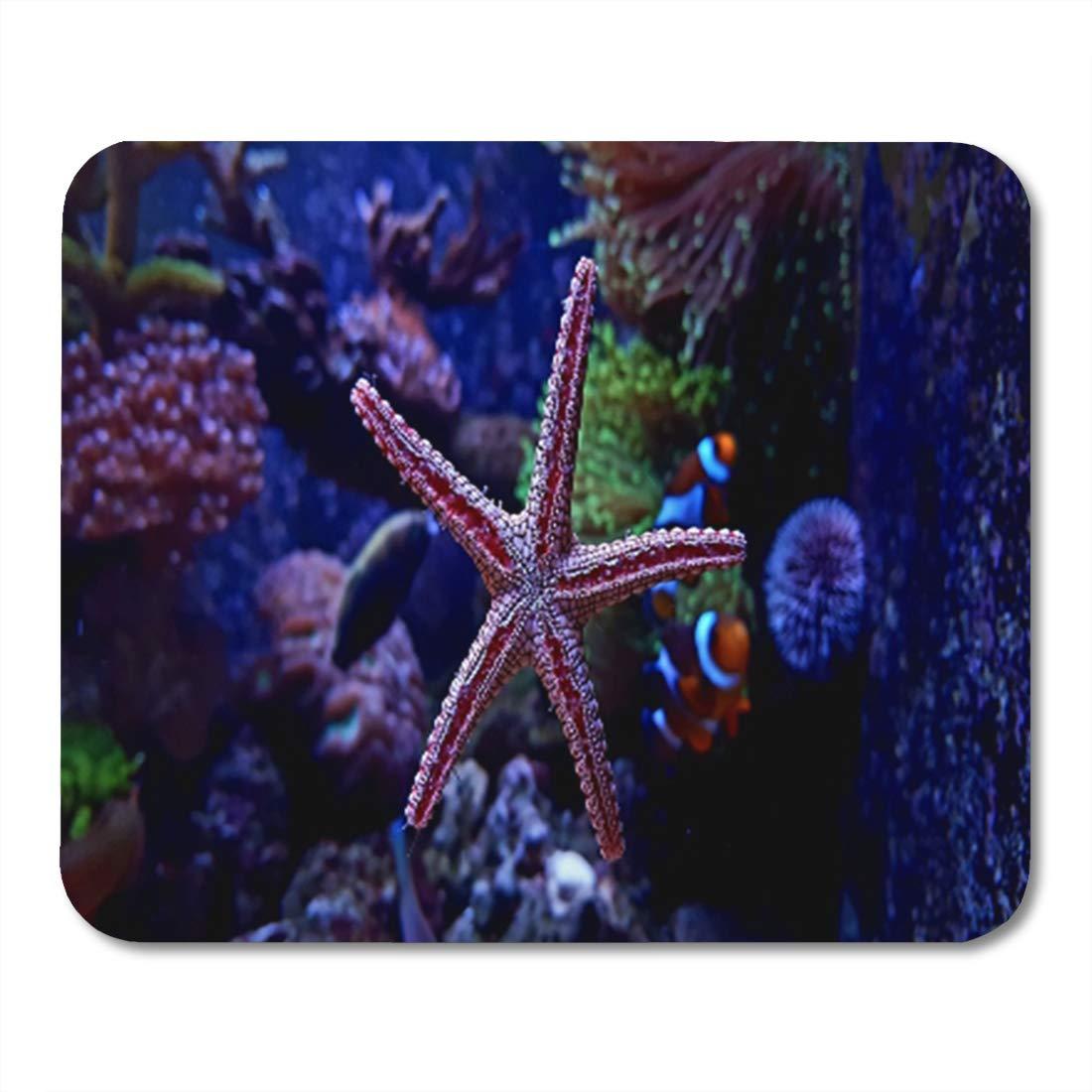 Amazoncom Semtomn Gaming Mouse Pad Underwater Colorful Seastar 1100x1100