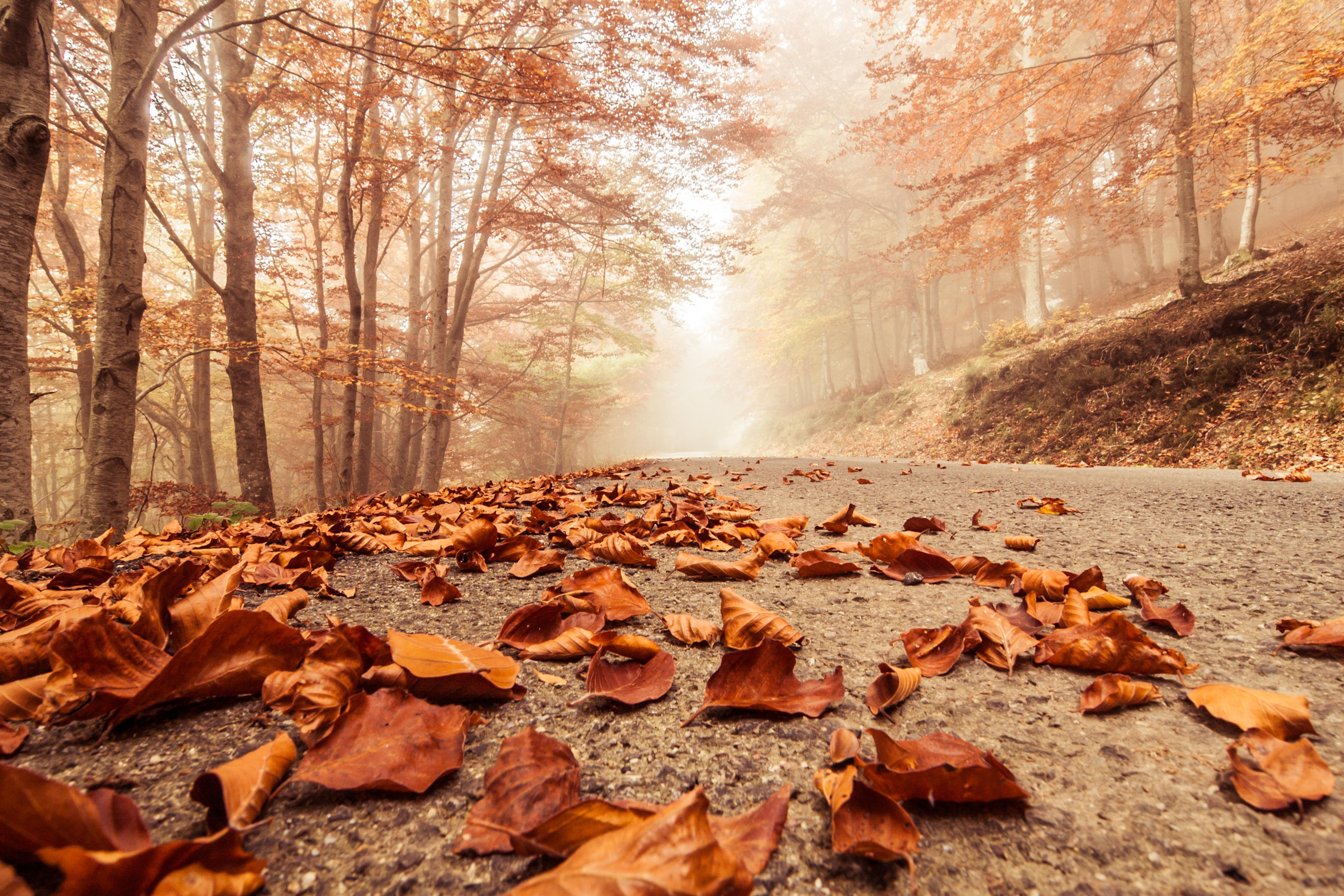 4K wallpaper   Landscapes   macro trees nature autumn forest 5000x3334