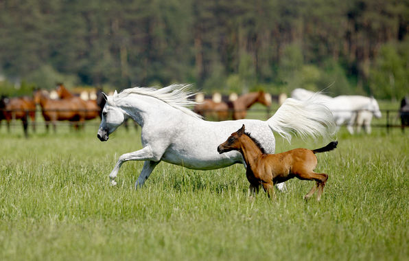 Spring Wallpaper With Horses