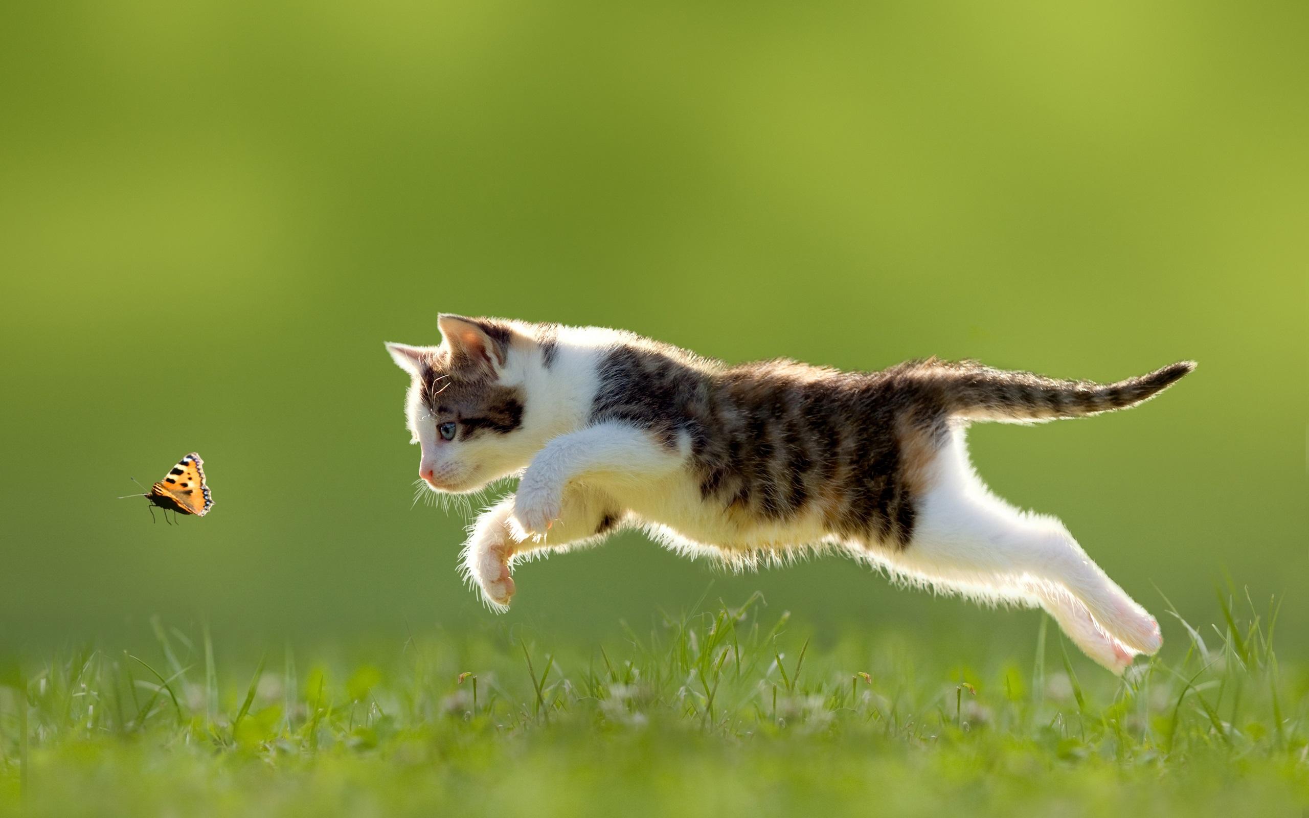 Cat Wallpaper butterfly jumping grass   HD Wallpapers Ultra HD 2560x1600