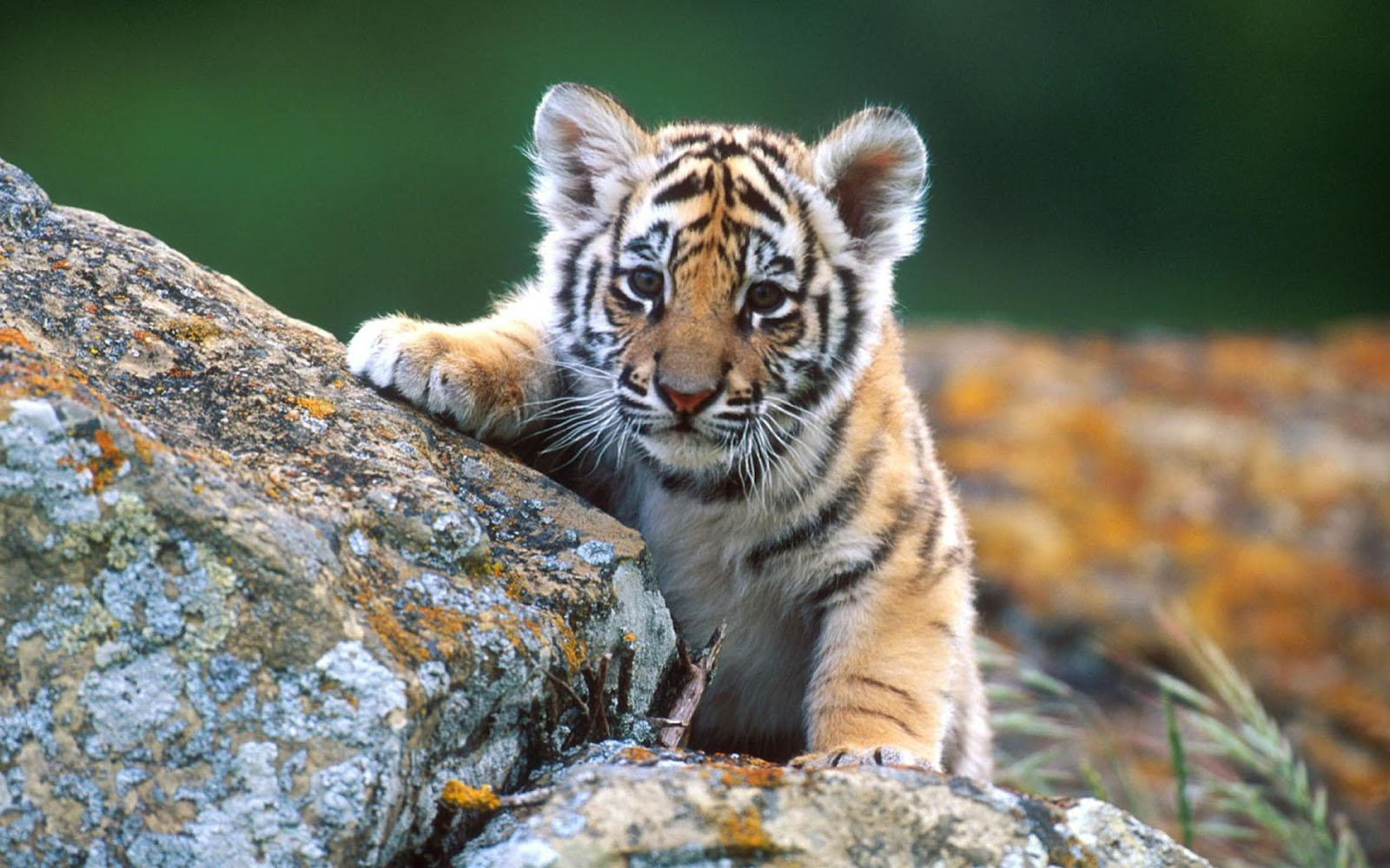 wallpapers animals desktop wallpapers animals desktop backgrounds 1600x1000