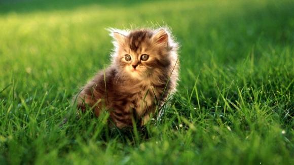 foto kucing lucu keren terbaru rumput 580x326