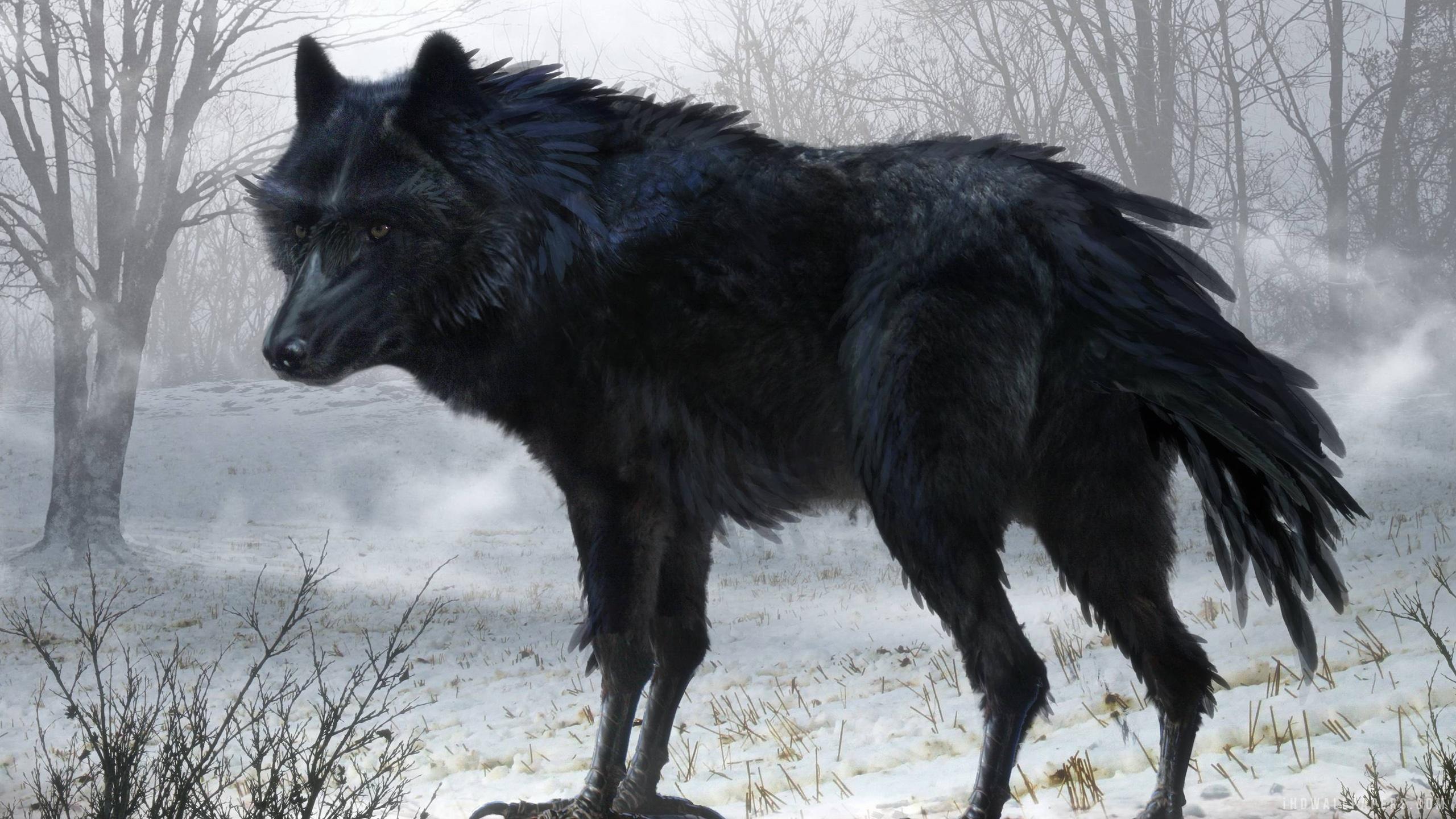 Black Wolf Art Wallpaper 2560x1440