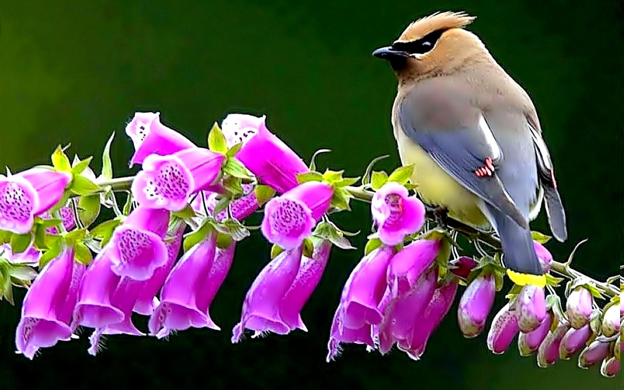 spring bird desktop wallpaperjpg 1280x800
