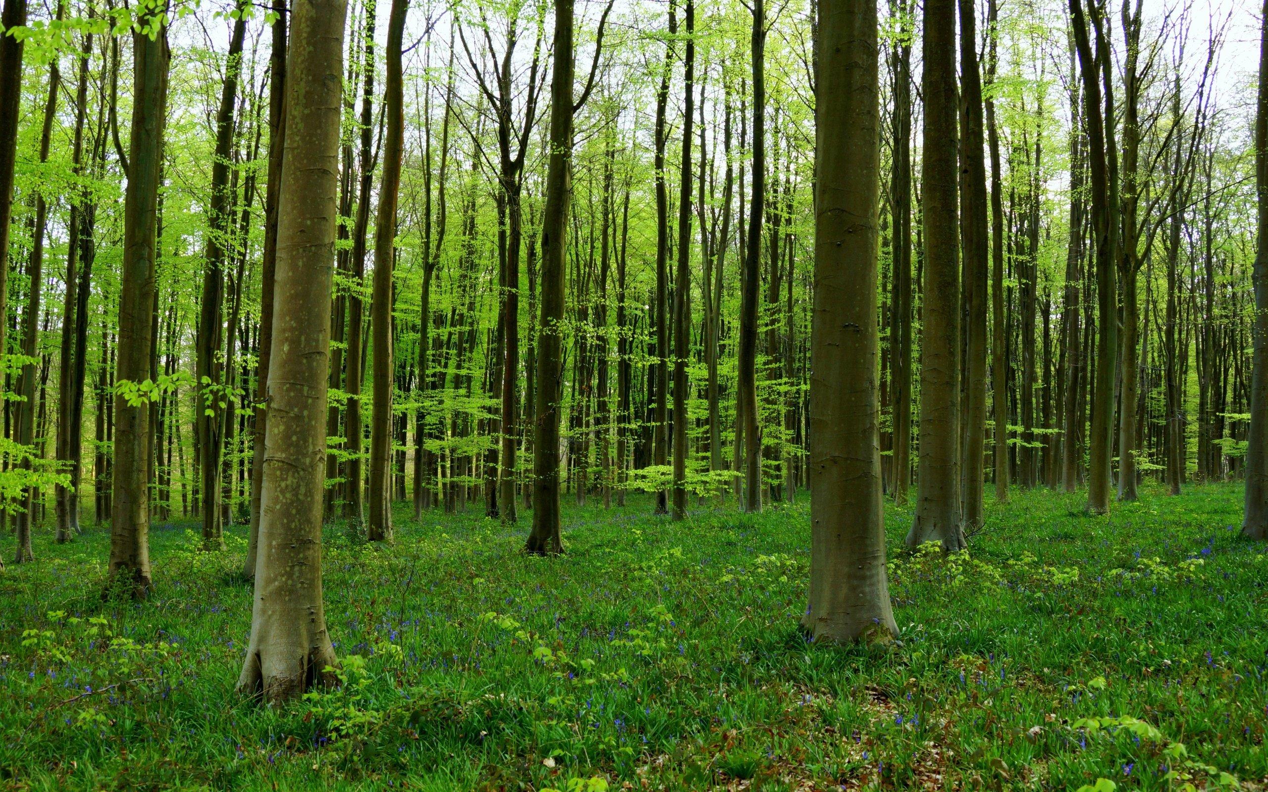 Tree Wall Mural Wallpaper Trees Forest Wallpapersafari