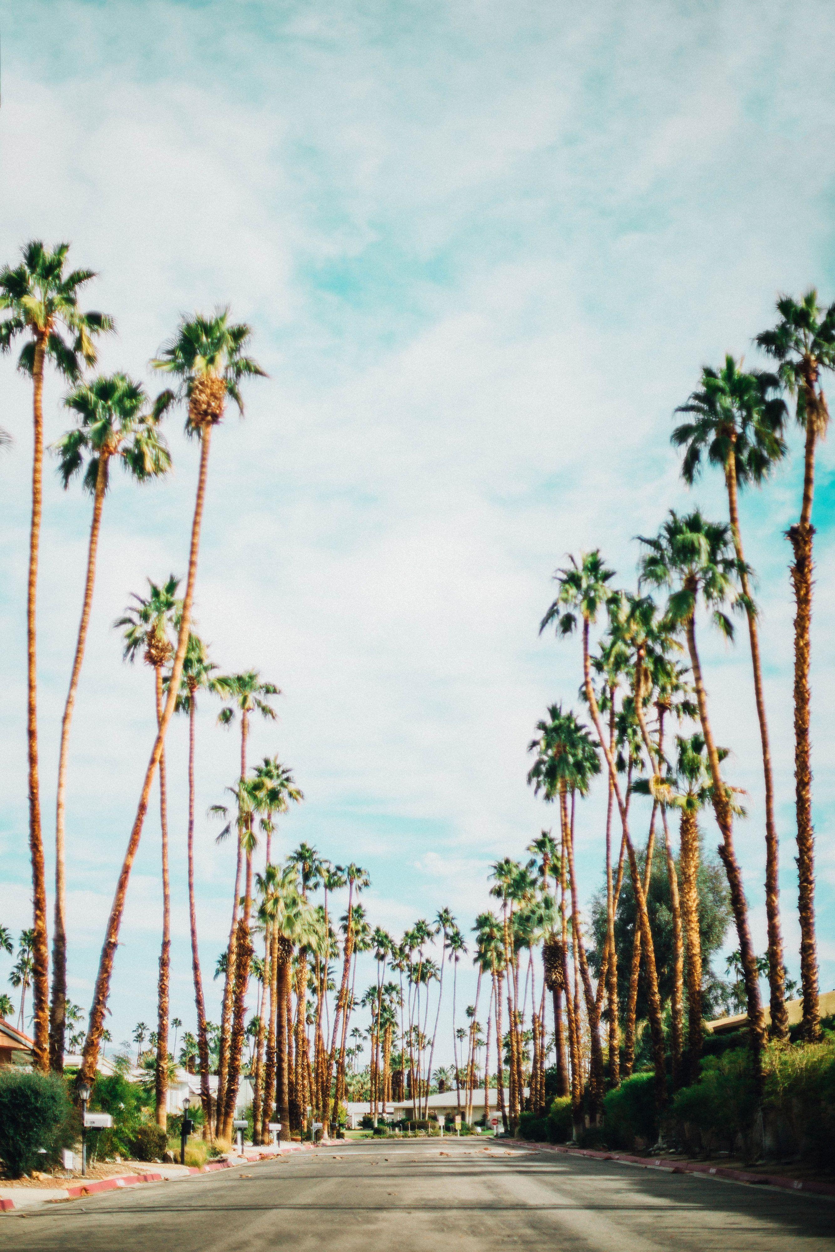 Photo Diary Palm Springs CA Near Far Palm springs Cool 2667x4000