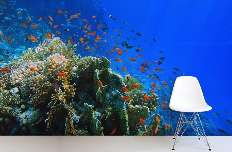 Bright Coral Wallpaper Wall Mural MuralsWallpapercouk 764x500