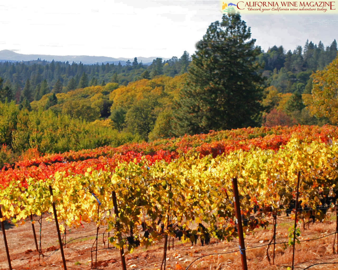 California Wine Magazine   Wallpaper 1280x1024