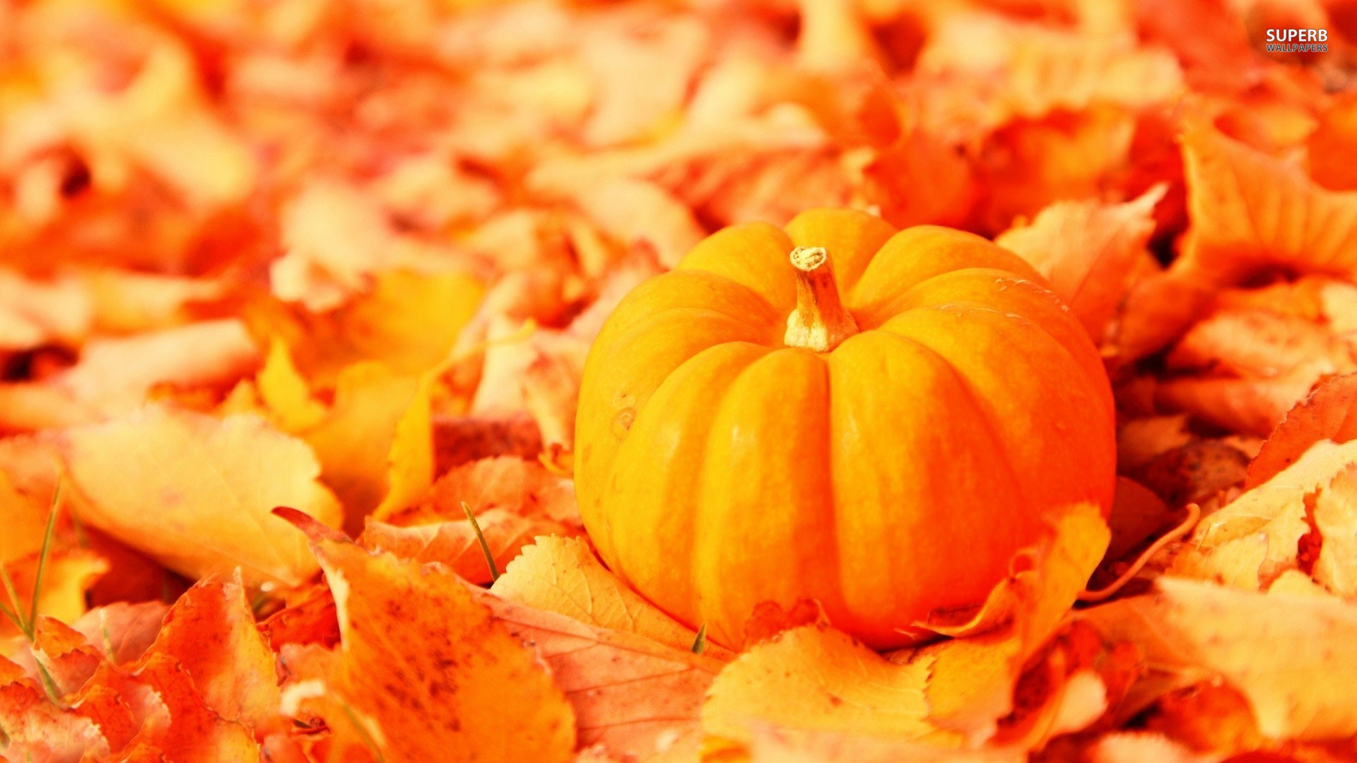 free fall wallpapers with pumpkins wallpapersafari