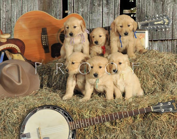 Country music litter background 3 photo   Barry Rosen photos at pbase 600x471