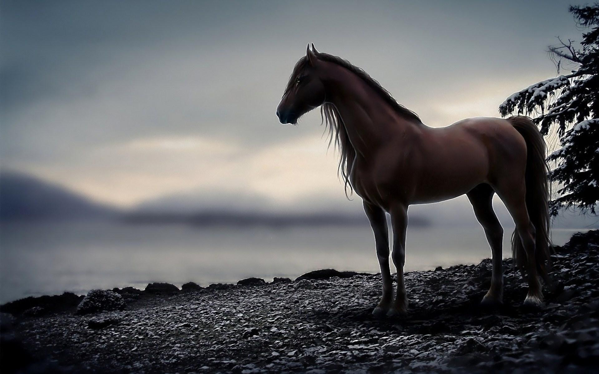 HD Horse Wallpaper Download 1920x1200