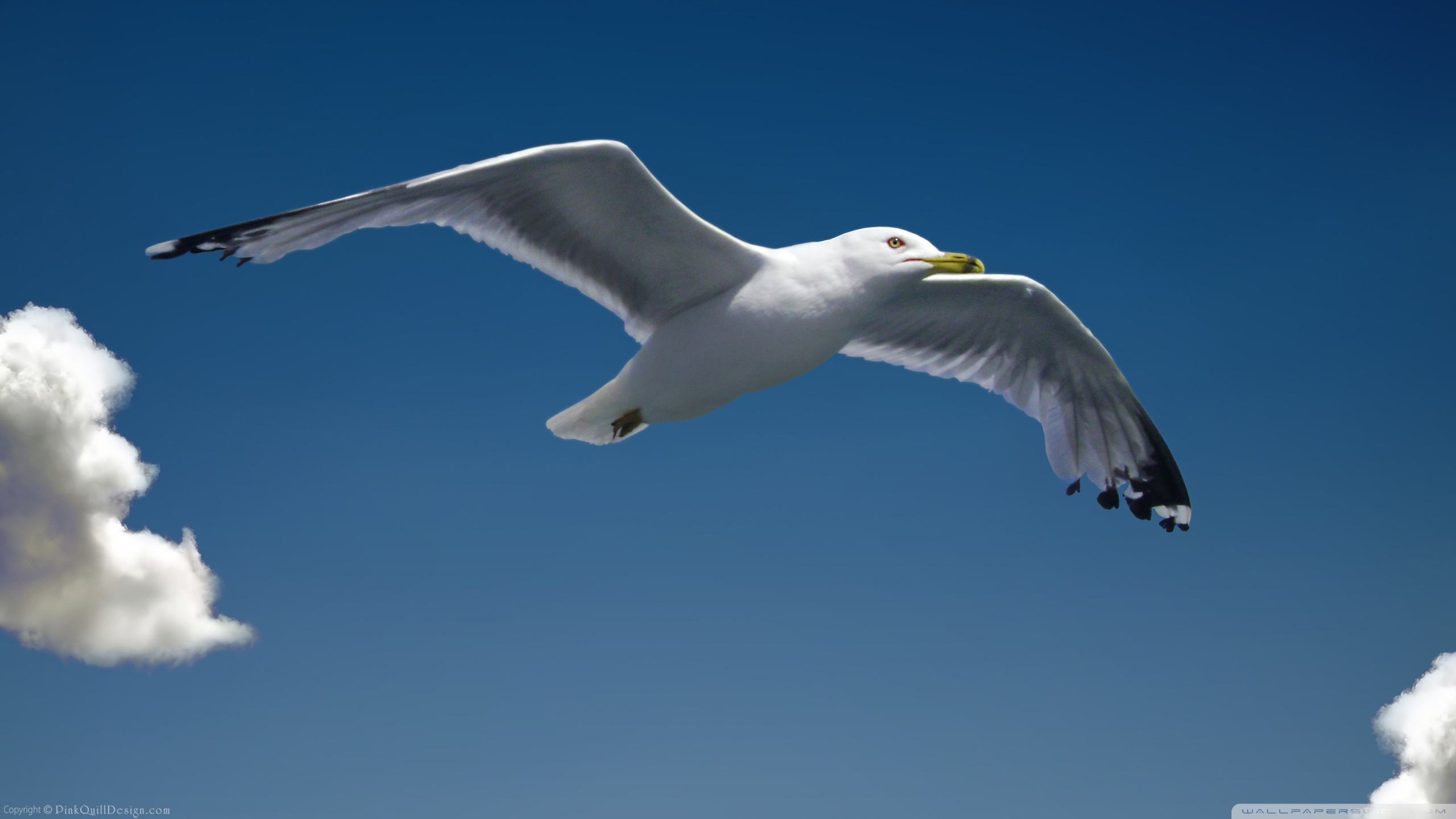 Seagull Pictures wallpaper 2560x1440 75038 2560x1440