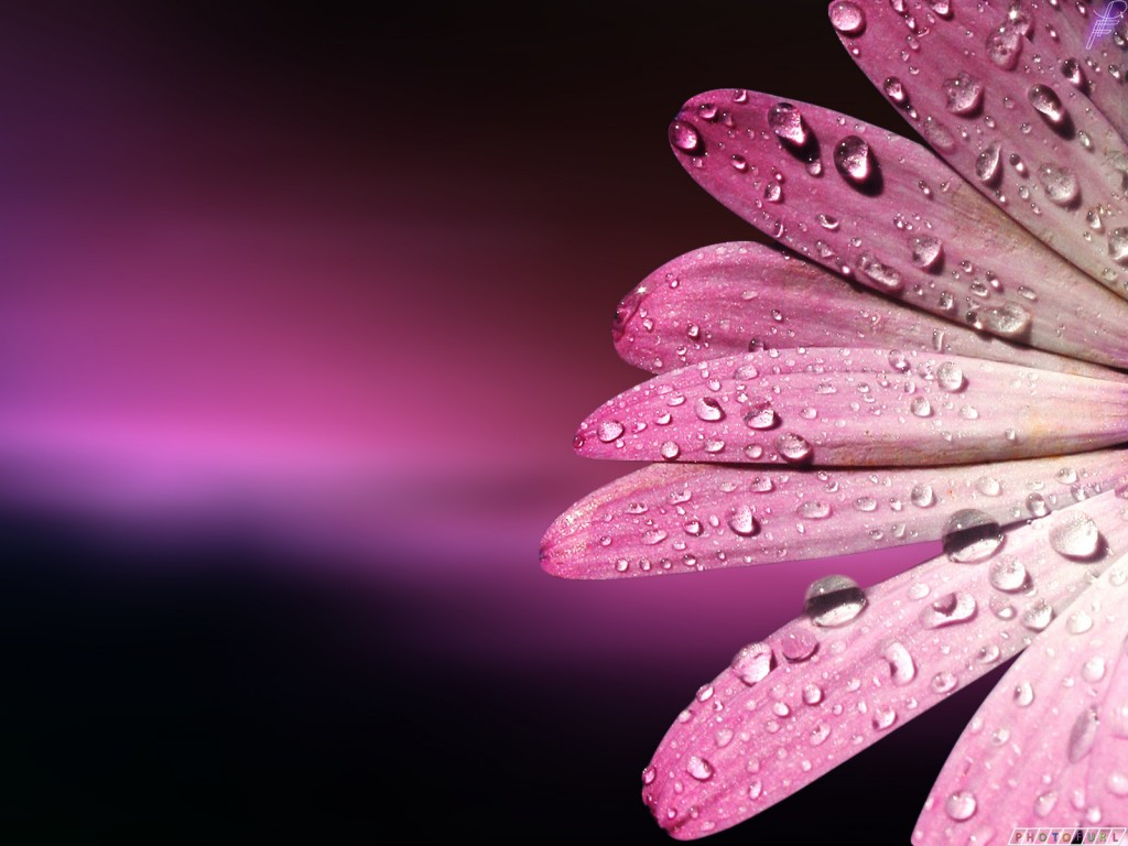 Beautiful Pink Flower Wallpaper Flowers Healthy